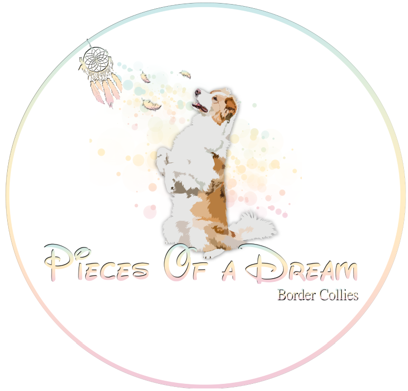 Pieces of a Dream Border Collie kennel