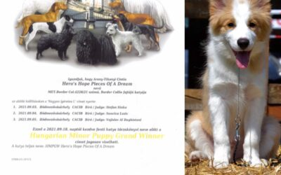 Hungarian Minor Puppy Grand Winner