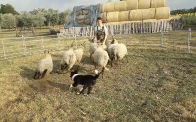Bárányokkal Suttogó